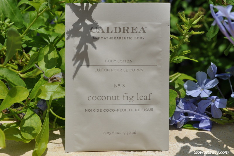 Caldrea Body Lotion (Coconut Fig Leaf)