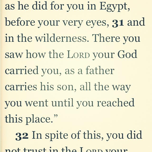 Deut 1:31 |Daily Bible